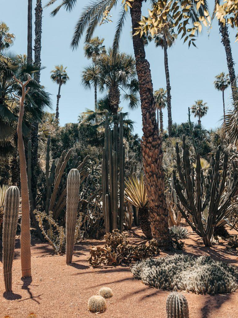 Marrakesch Jardin Majorelle Kakteen
