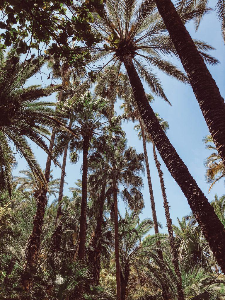 Marrakesch Jardin Majorelle Palmen